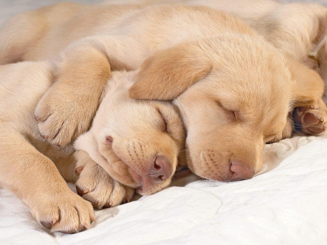 分割睡眠なんです。