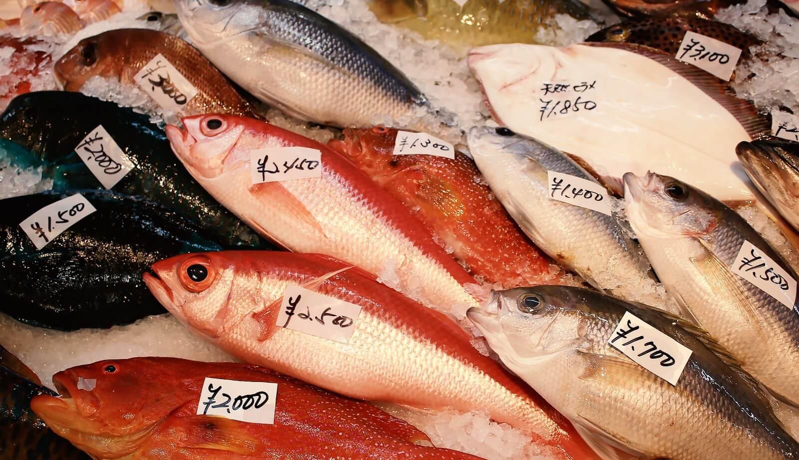 ふるさと納税 魚 注意