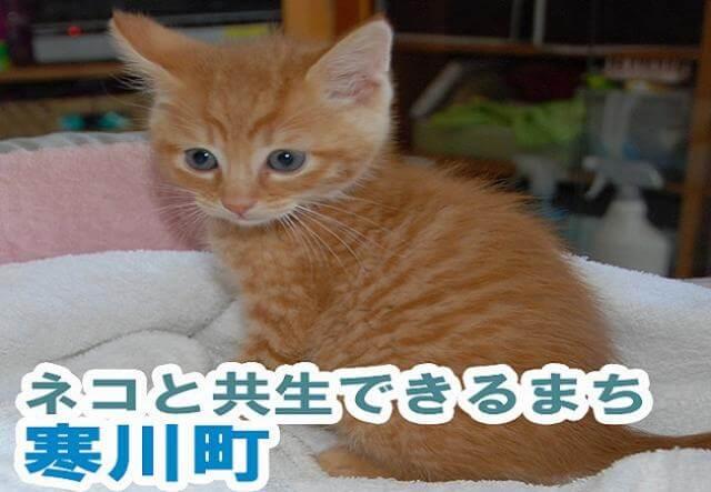 寒川キャットプロジェクト