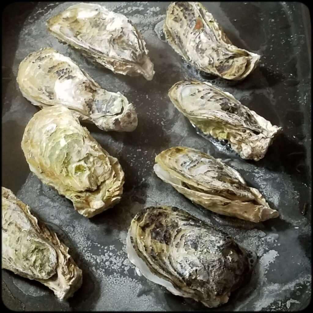 ふるさと納税 牡蠣