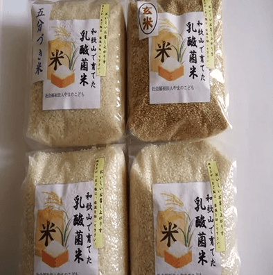 ふるさと納税 乳酸菌で育てたお米